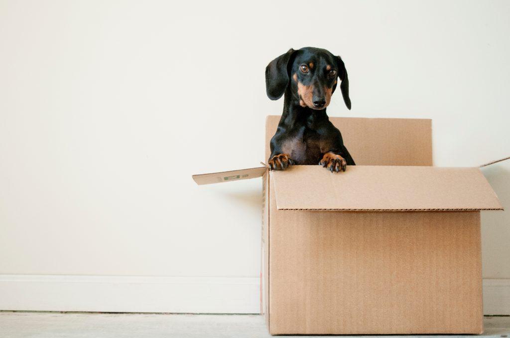 moving-day-hacks-meredith-martin-san-francisco-realtor